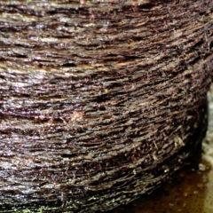 Premsat de la pasta que queda després de la trituració