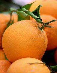 taronja imperial